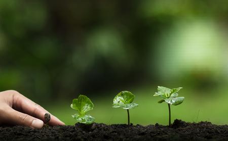 自然、コーヒーの木、新鮮な木を植える
