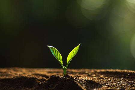 Plant a tree in nature,coffee tree,fresh,