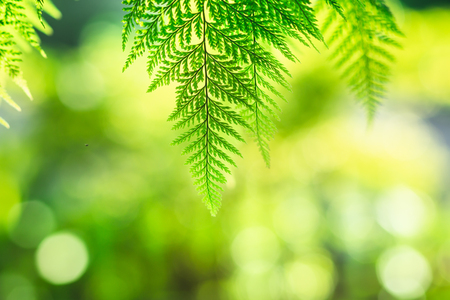 Fern leaf green nature background evening light Archivio Fotografico