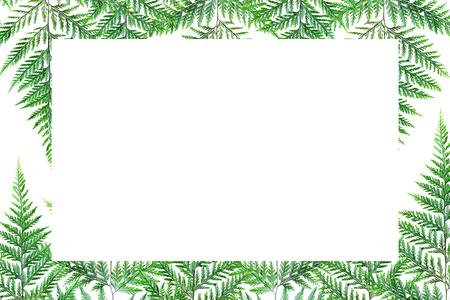 Fern leaf Isolate green background