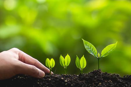 Groeiende bomen leider bomen Bomen planten Save world concept