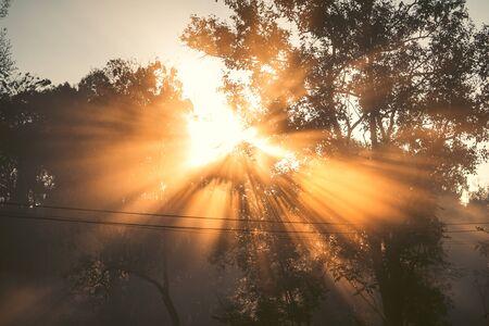 Luz de la mañana, amanecer y niebla en la naturaleza, luz del sol. Foto de archivo