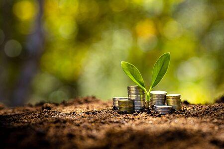 Geld und Wachstum - Gestapelte Münzen Auf dem Boden und es gibt Bäume Standard-Bild