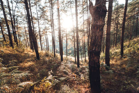 In the forest, trees with warm light in the evening.Forest