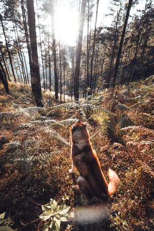 The dog in the forest, trees with warm light in the evening.