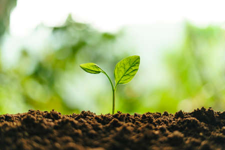 Small trees on the soil in nature Planting trees