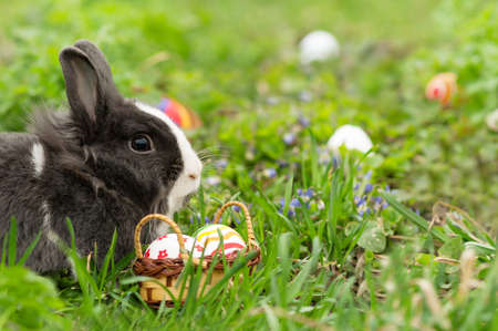 Easter Bunny eggs found in a small basket on the grass photo