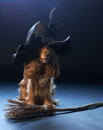 cap hunting dog: red dog sitting in a witches hat