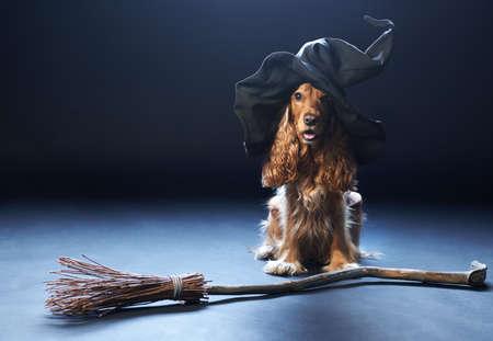 赤い犬の魔女帽子座っています。