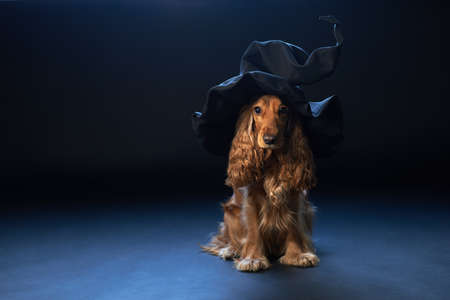 red dog sitting in a witches hat