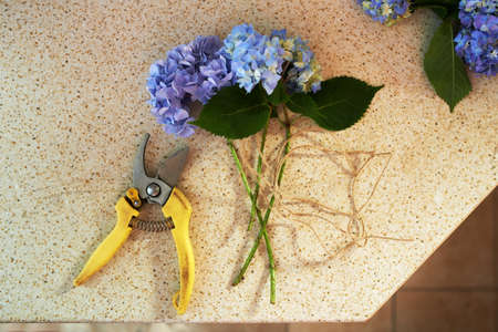 secateurs: cut flowers and secateurs are on the table Stock Photo