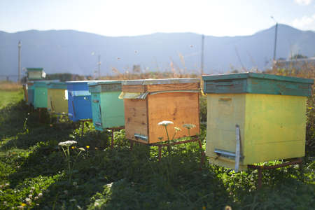 many colored: There are many colored hives in the mountains