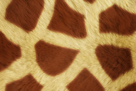 girafe: Fur Animal Textures, girafe Stock Photo