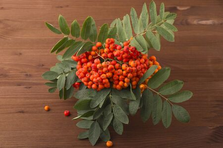 A branch of red mountain ash with a green leaf. Wooden background Standard-Bild