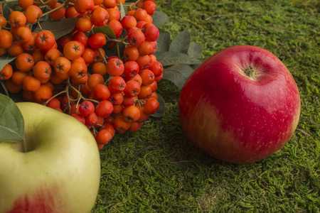 Ripe apples and fruits of red mountain ash with green leaves. Against the background of green grass