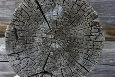 Old weathered log. The texture of the log shift. For Backgrounds  Stock Photo