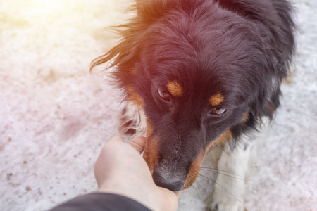 A small stray dog licks a human hand, on the street