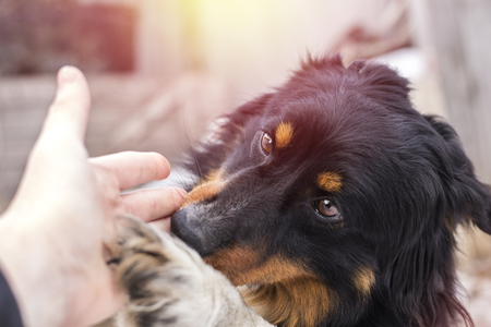 A small stray dog licks a human hand, on the street Stock Photo