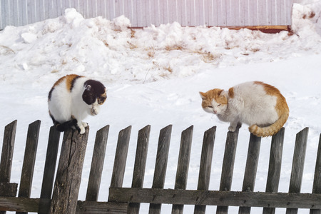 Two cats sit on an old fence. Clarification of relations. Quarrel against each other Banco de Imagens