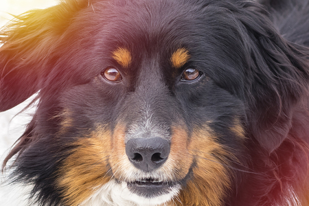 The look of a stray dog, close-up