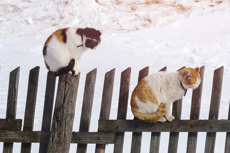 Two cats sit on an old fence. Clarification of relations. Resentment