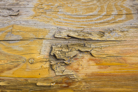 Texture of the dyed wood. Background