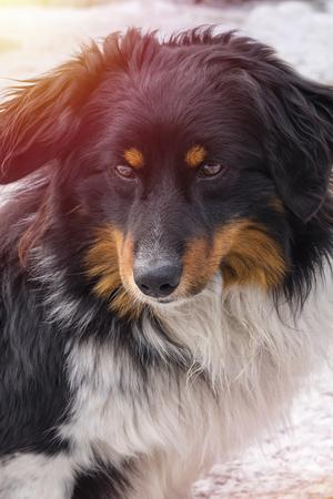 Sad look of a dog. Close-up