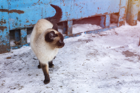 Beautiful gray brown cat with blue eyes, on a street 3 Banco de Imagens