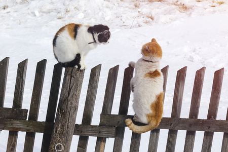 Two cats sit on an old fence. Clarification of relations. Spring, love Banco de Imagens