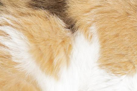 Głowa szarego kota na ulicy, zbliżenie Zdjęcie Seryjne
