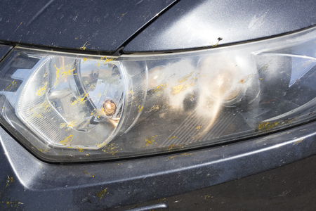 The headlights of the car in spots from insects, beetles, mosquitoes, butterflies. Close-up Reklamní fotografie