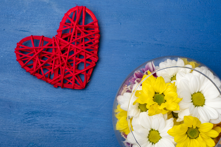 Colorful chrysanthemum in a glass vase and a red heart on a blue background. Copy space