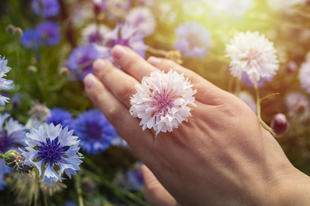 Flower of a cornflower on the hand of a woman. Ring from a natural flower. Copy space