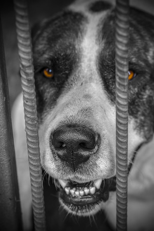 Aggressive dog in a cage, close-up