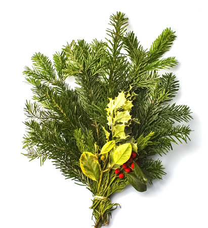bunch of spruce twigs with holly mistletoe on a white background. Isolated object
