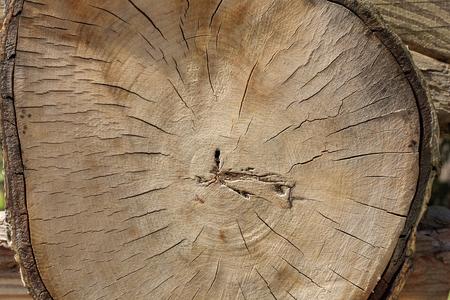 cut of an old tree. cross section 版權商用圖片