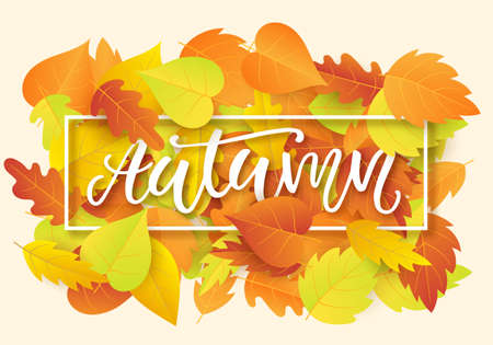 Autumn banner template with bright colorful fall leaves Illustration