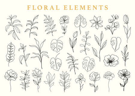 Floral elements set, botanical drawings. Hand drawn ink one line flowers and leaves sketches collection, vintage style. Vector illustration