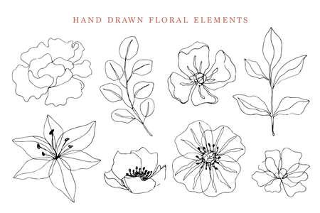 Floral elements set, botanical drawings Ilustração