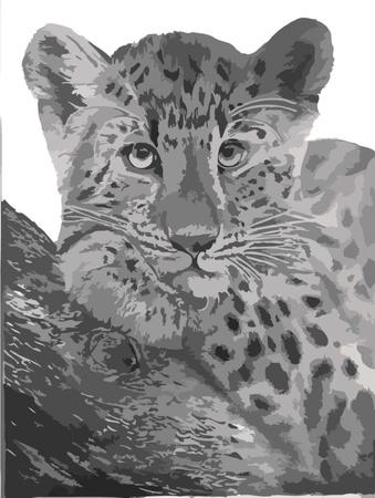 tigre bebe: Real ilustración leopardo que tiene todos los caminos listos Vectores