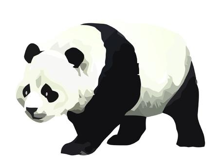 Panda Stock Vector - 12978085