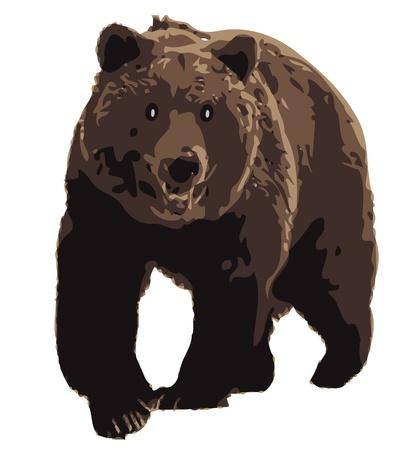 Brown Bear Stock Vector - 12978094
