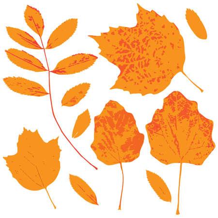 Autumn leaves vector set for web, print, wallpaper designs. Vector