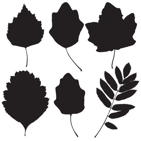Autumn leaves vector set for web, print, wallpaper designs. Vector