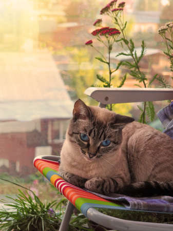 Beige cat chilling out at the green flowery balcony Archivio Fotografico