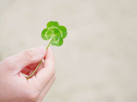 Green our leaf clover in a man's hand. Summertime concept. Closeup with space for text