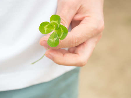 Green our leaf clover in a man's hand. Summertime concept. Closeup with space for text Banque d'images