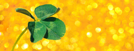 Fresh green lucky four leaf clover on yellow sparkling bokeh background. Design for your ad, poster, banner. Beautiful st patrick's day concept