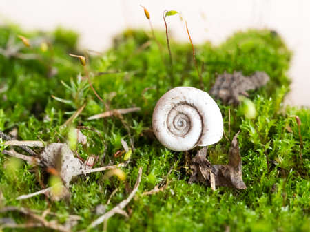 Macro of mossy forest floor. Bryum moss spore capsules with white snail shell. Natural green background. Close up view, selective focus image