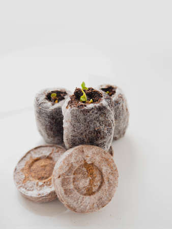 Young sprout in peat tablet on white background. Easy gardening concept.